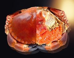 [Friday and Saturday only]British live Crab 【周五/周六到货】空运英国面包蟹(母蟹)