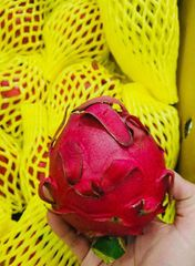 Air Fresh Red Dragon Fruits 空运红肉台湾火龙果2颗