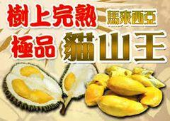 Fresh Malaysia Musangking Durian 顶级新鲜空运马来西亚猫山王榴莲1颗