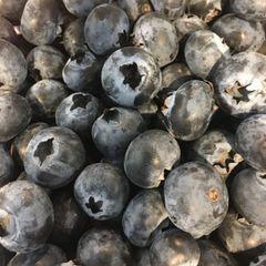 Jumbo Sweet Blueberries 美国大甜蓝莓289克/盒