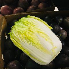 Organic Napa cabbage 有机大白菜一颗(约4磅)