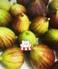 Brazil figs 巴西新鲜大甜无花果