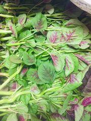 本地金穗农场新鲜红苋菜1磅
