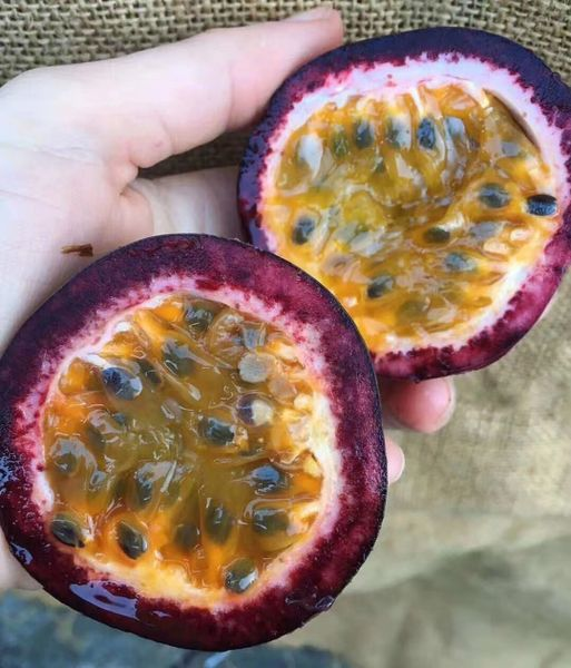 Australian Premium Passion Fruits 【特级果/香气扑人】空运澳洲紫色百香果