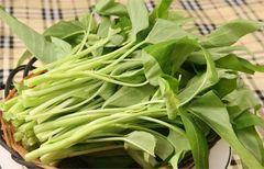【当日清晨收割】本地金穗农场空心菜1磅袋