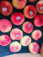 Pro_California Sweet Donut Peach 6 pcs 【特大号】加州精选白玉蟠桃6颗