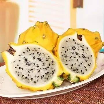 Yellow dragon fruits 新鲜树上熟麒麟果