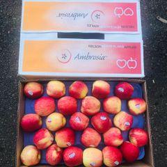 Newzealand Ambrosia Apple 5 pcs【最新到店】新西兰蜜香安培士苹果5颗袋