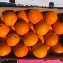 Cara cara Oranges 澳洲甜红橙