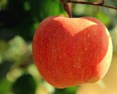 Local apples 2lbs bags本地无打蜡苹果2磅