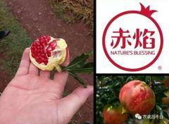 Fresh Pomegranate 赤焰特级突尼斯软籽石榴礼盒