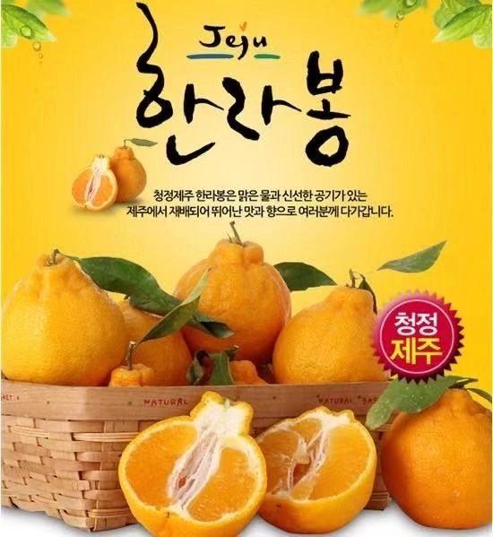 Korea Hallabong box 空运韩国济州岛秃顶柑礼盒(2公斤,7/8颗)