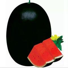 Densuke watermelon 田助无籽西瓜(超甜)