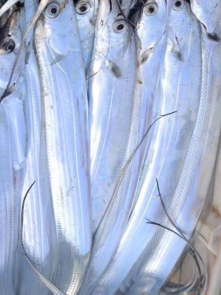 Fresh zhoushan seafood 空运新鲜舟山海鲜