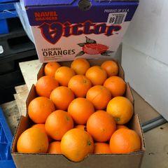 Victor Oranges 88 颗箱Victor甜橙