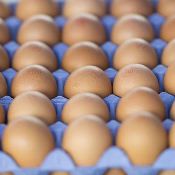 Local fresh Eggs 本地新鲜鸡蛋