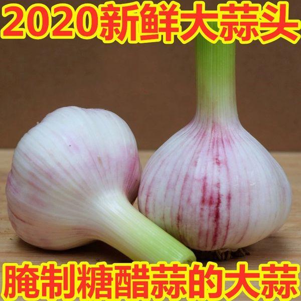 Local Fresh young Garlic Heads 9-15 counts 本地农场新鲜嫩蒜头一扎(10-15头)