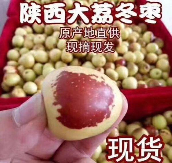Fresh Jujube 新鲜甜脆大荔牛奶冬枣500壳盒