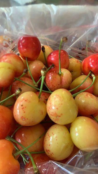 Local Rainier Cherry 本地甜脆超大黄樱桃9.5Row