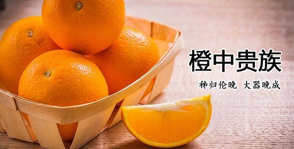 Zigui Oranges 秭归伦晚甜橙