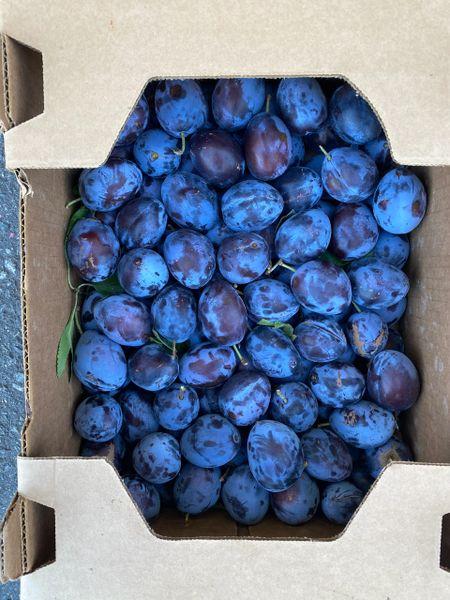 Local prune plums 10 lbs 本地超甜西梅10磅