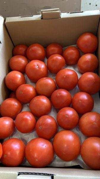Organic Field Tomatoes 本地有机沙瓤番茄2磅
