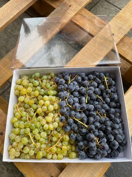 Local Organic Grapes 【本地有机葡萄组合】1.75磅小珍珠1.75磅玫瑰香