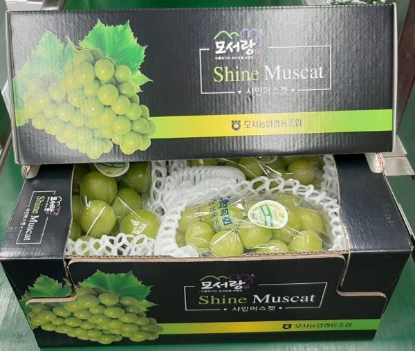 Muscat Green seedless Grapes韩国顶级香印青提