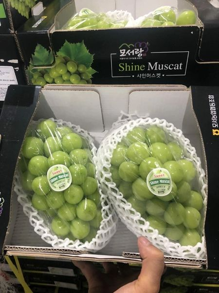 Muscat Green seedless Grapes韩国顶级晴王青提礼盒