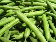 Veg.o_Local farm Green Bean 1 lbs 【最新到店】本地农场四季豆1磅袋