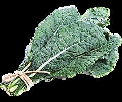 Veg.o_Organic Black Kales one bunch 有机黑甘蓝 1扎