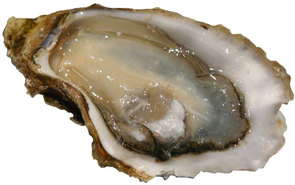 Seafood_Local Live Oyster 1 DOZEN 温岛鲜活特大生蚝一打