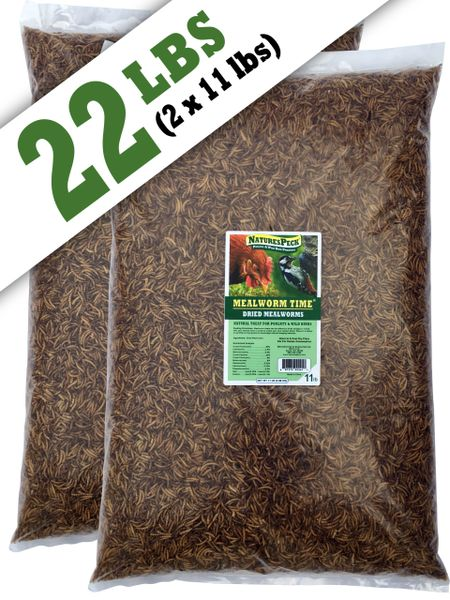 Mealworm Time® Dried Mealworms 22
