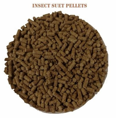 NEW! Peck 'A' Bites Veggie Suet Pellets (Insects)
