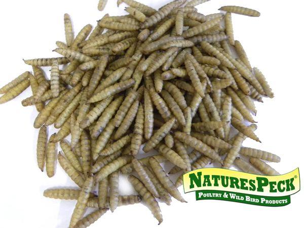 Dried Black Soldier Fly Larvae/Sunworms™ 11 lbs or 15 lbs bag