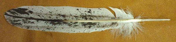 Imitation Immature Bald Eagle Salt and Pepper Feather