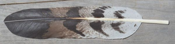 Imitation Cooper Hawk Feather