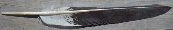 Imitation Bald Eagle Spike Feather