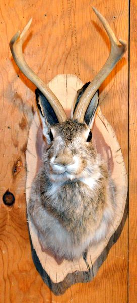 Jackalope Wall Mount with Free Shipping