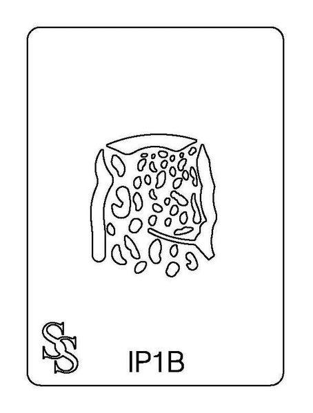 IMPRESSION PLATE IP1B LEOPARD