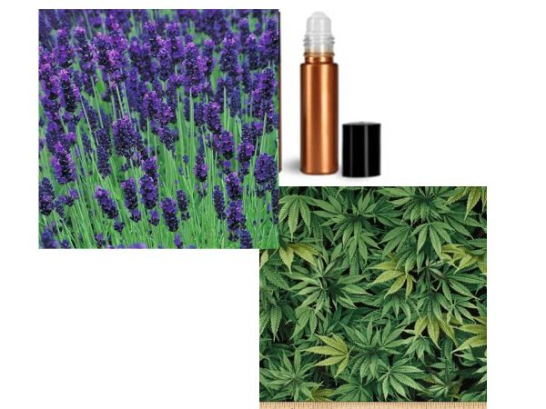 Organic Lavender 450 mg CBD Full Spectrum ROLLER for Anxiety