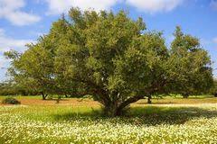 Argan Oil 100% Pure Certified Organic