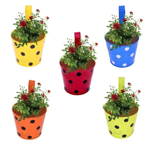 Coudre Dotted Round Railing Planters for Balcony, Terrace Garden, Flower pots for Home Decoration (Multi)