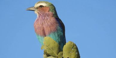Namibia Self-Drive Wildlife & Birding Safari - African Star Tours