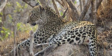 Leopard Malawi and Zambia Small Group Tour
