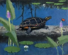 A painted turtle basking in a Spring sun.