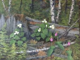 Spring at Wellesley College Pond. Lady Slippers and White Trillium.