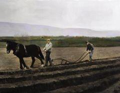Ploughing the Field - Ireland