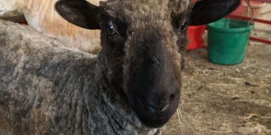 We are now offering small farm fiber processing.  Click below to learn more.