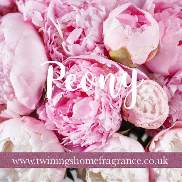 Limited Edition Peony Candle Tin